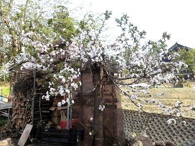 uonuma-street638.jpg