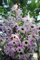 BL170402鶴見緑地の花1-1IMG_3708
