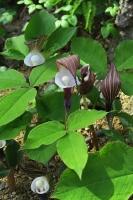 BL170402鶴見緑地の花2-4IMG_3764