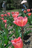 BL170402鶴見緑地の花2-8IMG_3648