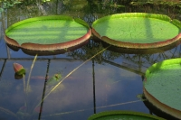 BL170402鶴見緑地の花2-IMG_3715
