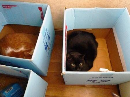 1ひと箱1匹
