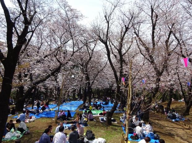桜@飛鳥山公園 (3)