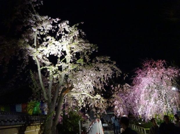 夜桜@南蔵院4-7 (3)