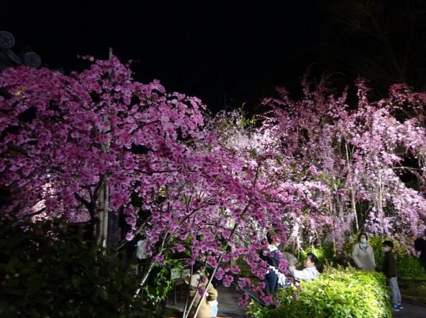 夜桜@南蔵院4-7 (19)