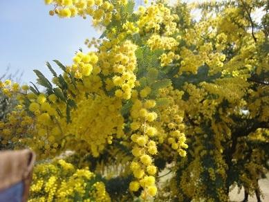 春の花18