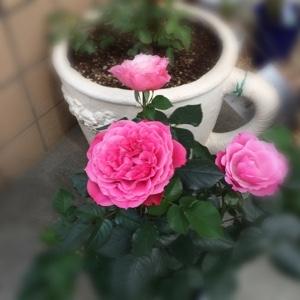 fc2blog_20170313132931c7e.jpg