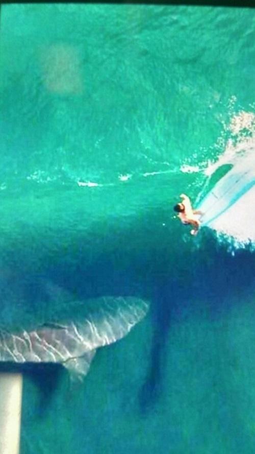 SharkSturnsml.jpg