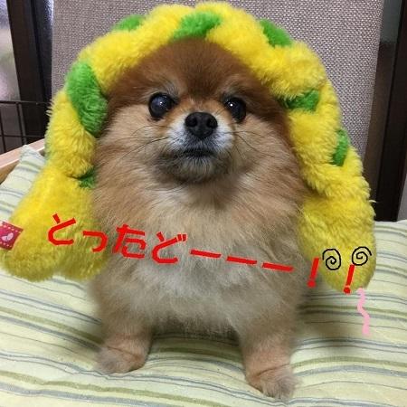 421ブログアナコンダ捕獲! (2)