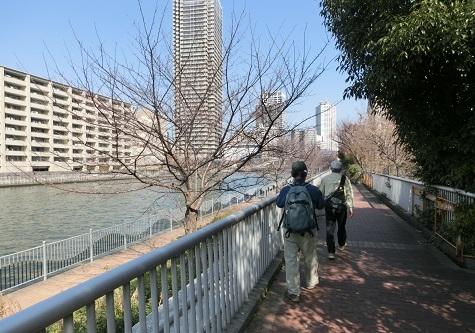 16 大川沿いを上流へ歩く