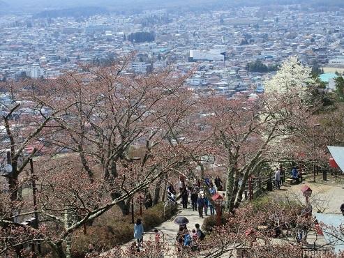 17 新倉山浅間公園 途中より