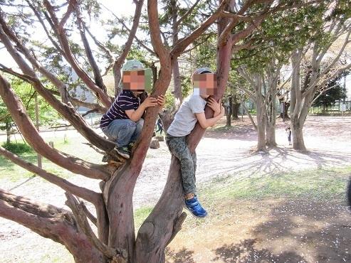 5 木登り