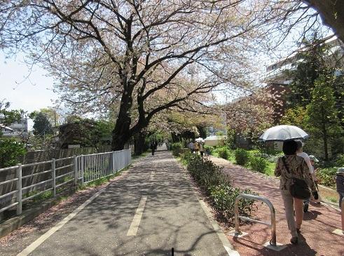 2 グリーンロードを散歩