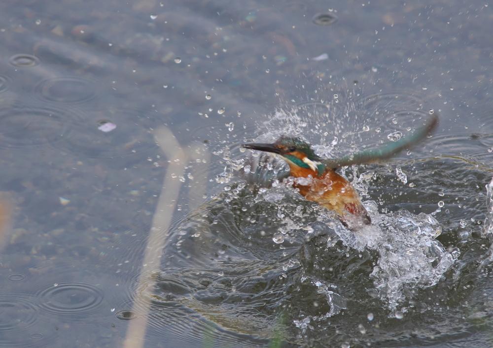 水浴び (4)