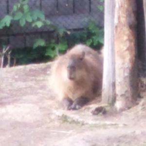 zoo01_20170505030936a7c.jpg