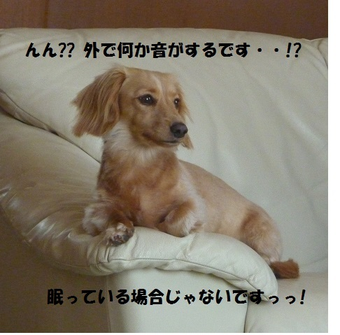 P1060957.jpg