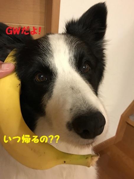 IMG_1578_201704102037358c0.jpg