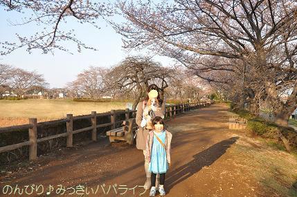 earlysakura01.jpg
