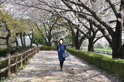 latesakura07.jpg