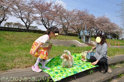 latesakura12.jpg