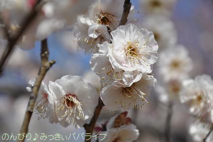 shinrinkoenbairin201715.jpg