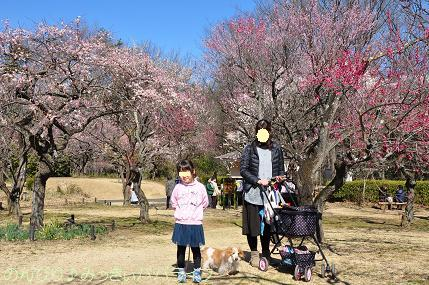 shinrinkoenbairin201730.jpg