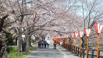 高田千本桜a