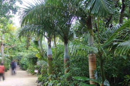 由布島植物園R