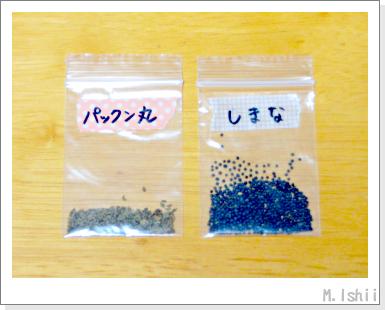 貴重な種2013_01