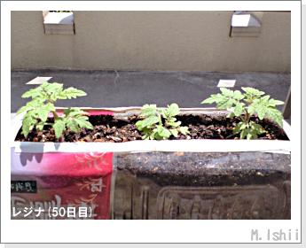 ペット栽培II(レジナ)12