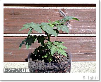 ペット栽培II(レジナ)20