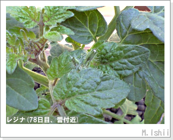 ペット栽培II(レジナ)21