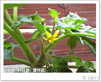 ペット栽培II(レジナ)23