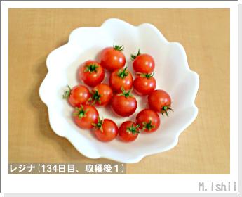 ペット栽培II(レジナ)44