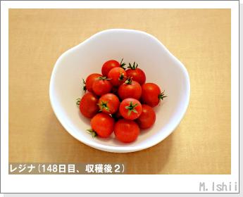ペット栽培II(レジナ)47