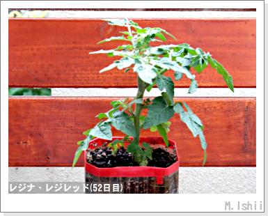 ペット栽培III(レジナ)26