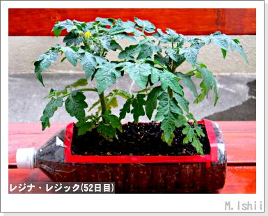 ペット栽培III(レジナ)29