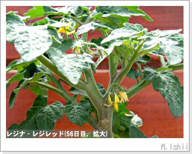 ペット栽培III(レジナ)32