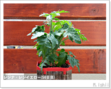 ペット栽培III(レジナ)33