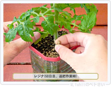 ペトさい(レジナ・改)46