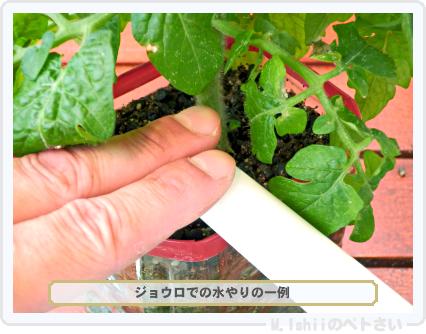 ペトさい(レジナ・改)62