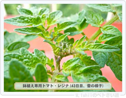 ペトさい(レジナ・R)26