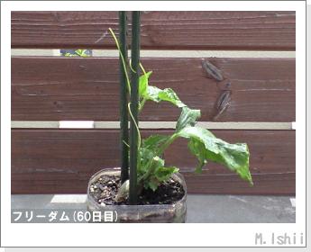 ペット栽培(フリーダム)10