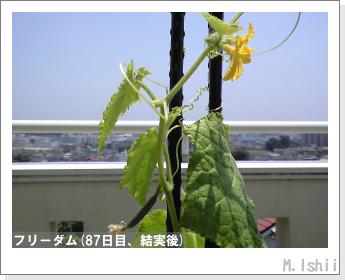 ペット栽培(フリーダム)13