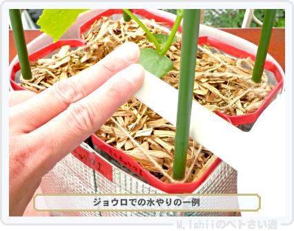 ペトさい(ミニきゅうり・改)40