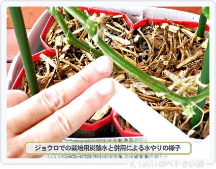 ペトさい(ミニきゅうり・改)83