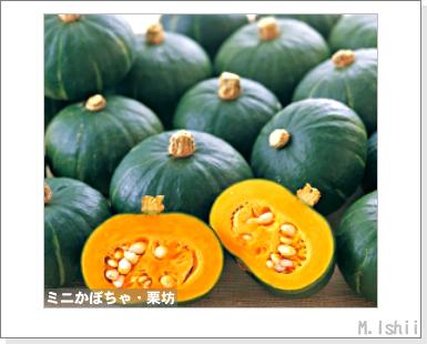 ペット栽培III(ミニかぼちゃ)01