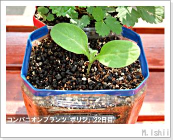 ペット栽培II(四季なりイチゴ)76