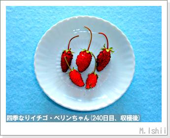 ペット栽培II(四季なりイチゴ)91