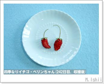 ペット栽培II(四季なりイチゴ)95